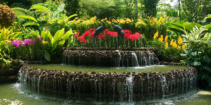 პოსტები სინგაპურიდან - ბუნების ზეიმი
